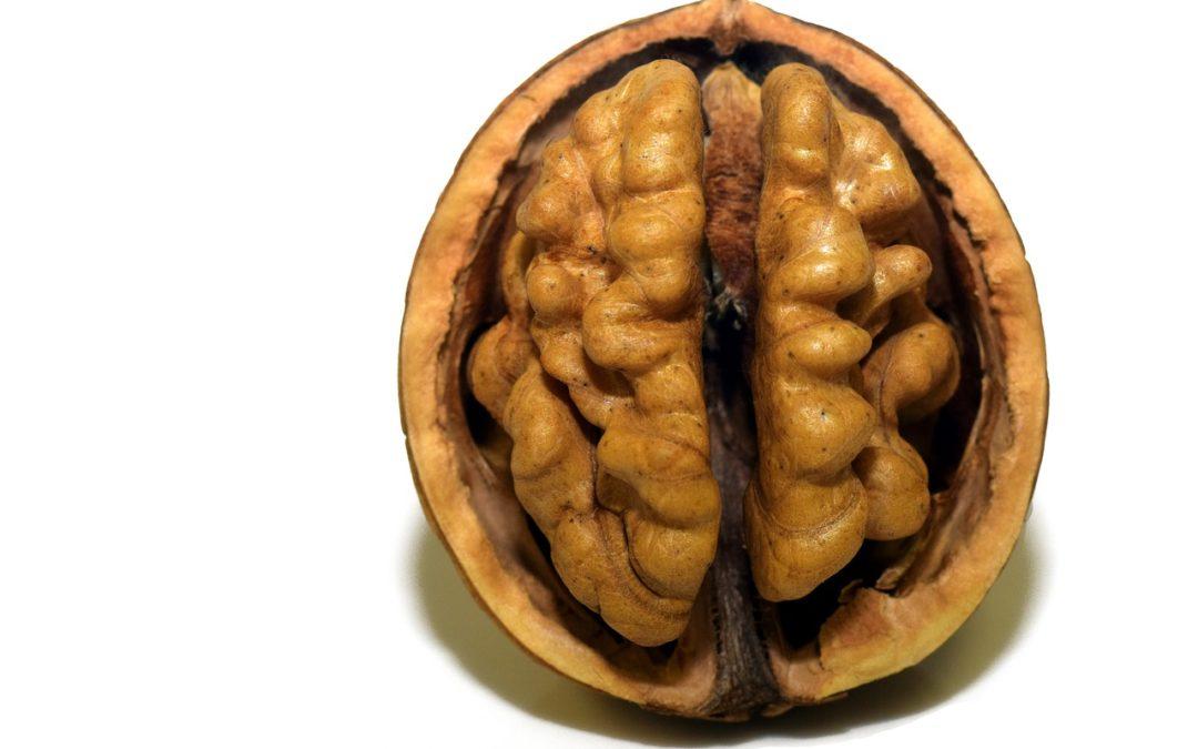 C'est quoi les neurosciences?