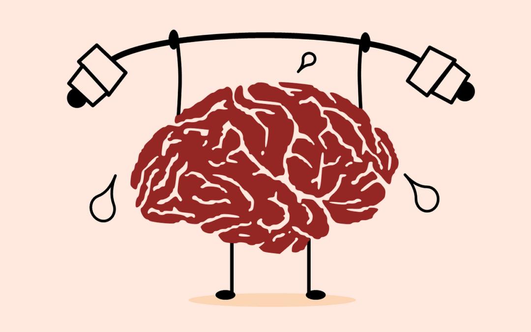 Le cervelet, petit mais costaud